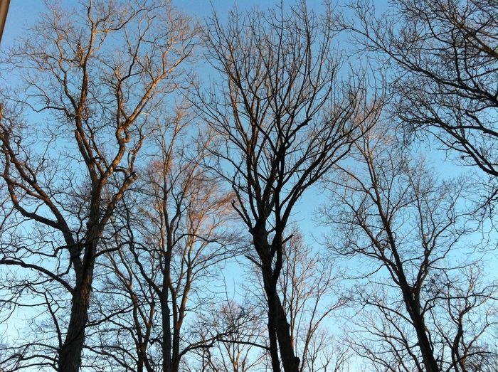 Daybreak amongst the trees ABeautifulMorning EyeEm Best Shots TheVille Streamzoofamily