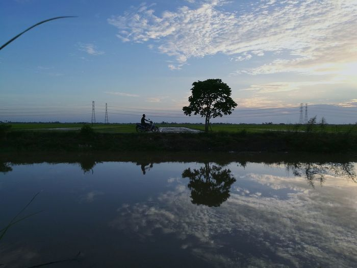 paddy field ReflectionThe Great Outdoors - 2017 EyeEm Awards Silhouette Tree Lake Water Agriculture Sunset Sky Outdoors Nature Adult People Day