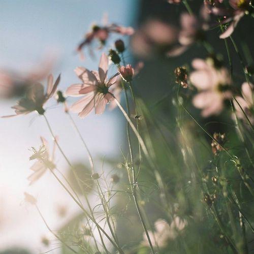 Japan Camera Film Photo Filmphotography 120 Film Eyemphotography EyeEm Nature Lover EyeEm Best Shots Flower