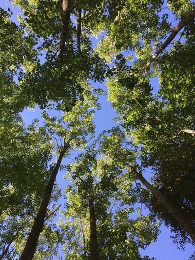 In the sky Tree