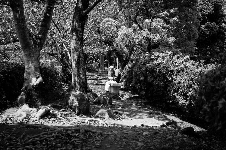 Packed Lunch Tree Plant One Person Real People Nature Day Growth Sitting Leisure Activity Lifestyles Women Adult Outdoors Standing Park Beauty In Nature Casual Clothing Full Length Trunk Sitting Man Tree Trees Himeji Castle Himeji Blackandwhite Black And White Monochrome person Shadows & Lights Shadow Tranquility Tranquil Scene Travel Destinations Travel Japan Japan Photography Canon Canonphotography Nature