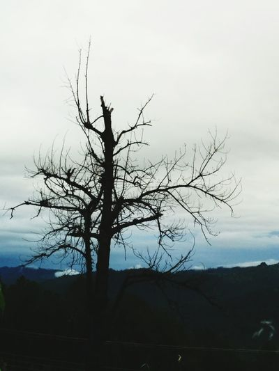 Scary Trees Nature_collection Himalayas
