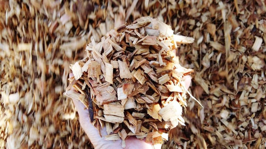 Woodchip Export Stock Yard Eucalyptus Size Sample
