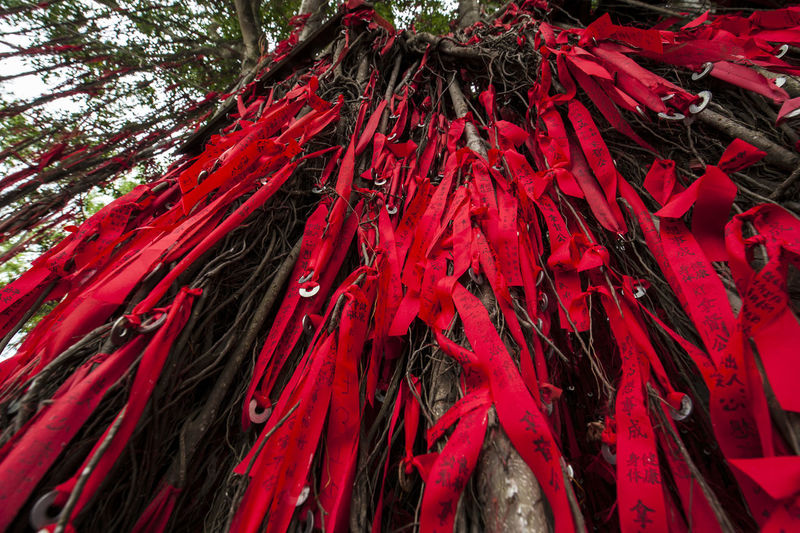 Full frame shot of red leaves hanging on tree