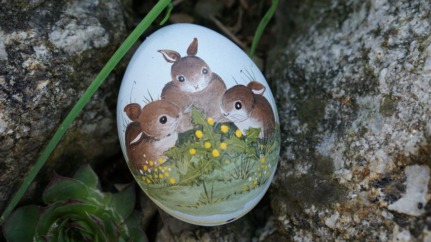 #Bunny #Easter #EasterSunday #NoFilter #celebration #easter Eggs #grass #green Color #no People #rabbit Animal Themes Animals In The Wild Beauty In Nature Nature Outdoors