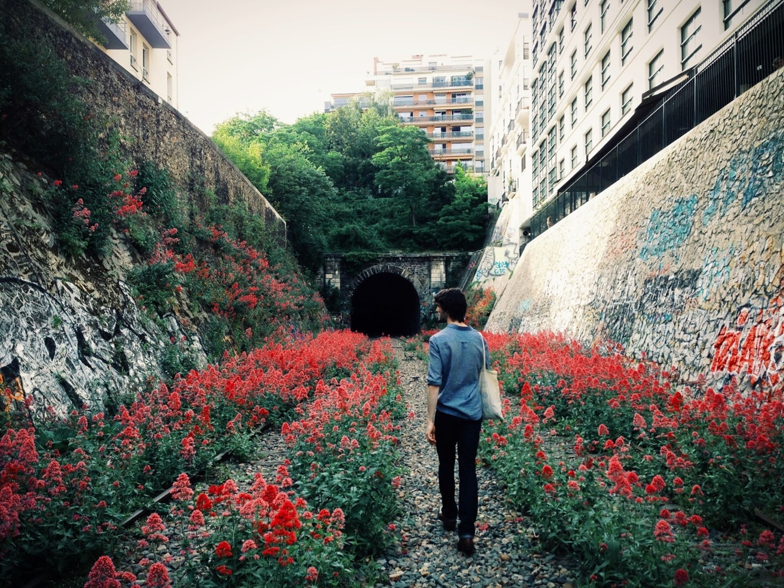 building exterior, built structure, architecture, rear view, lifestyles, flower, tree, walking, person, men, standing, leisure activity, growth, plant, casual clothing, full length, red, building
