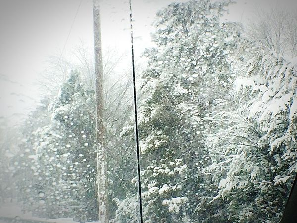 Snowstorm2016 EyeEm Nature Lover Snowy Snowday Windshield Nature_collection Let It Snow Snow Beautiful Day Dashboard View Eyemnaturelover Mothernature Beautiful Trees Passenger View