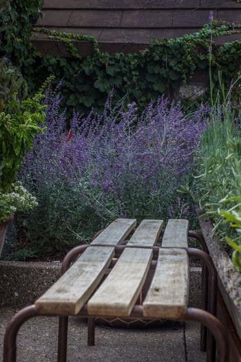 Purple flowers growing outdoors