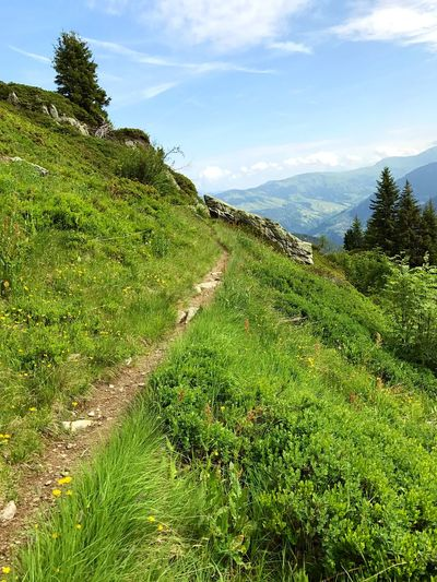 Alps Hiking Trail Pathway Path Rock - Object Green Color Nature Growth Grass Mountain Sky Tranquility Tranquil Scene Beauty In Nature Scenics No People Landscape Day Outdoors