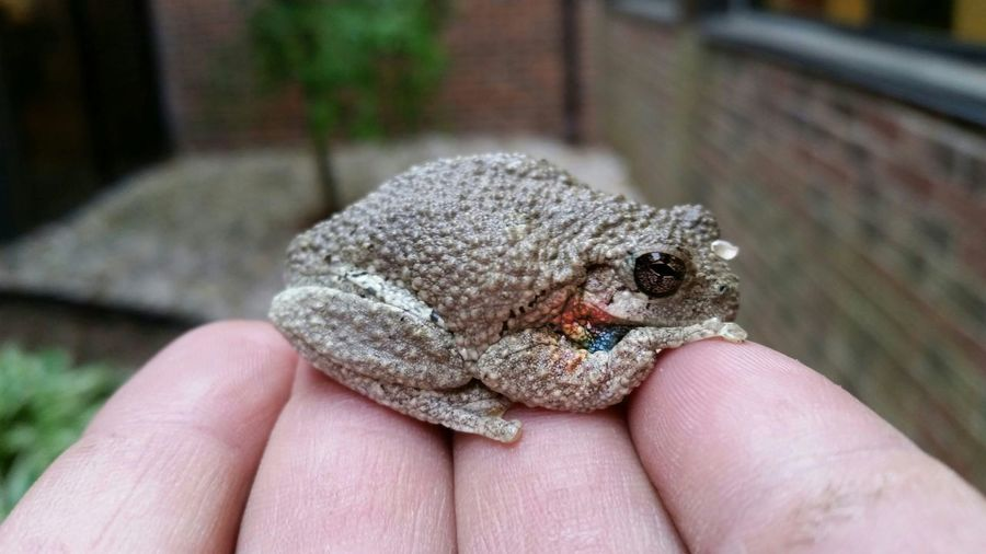Close-up of hand holding frog