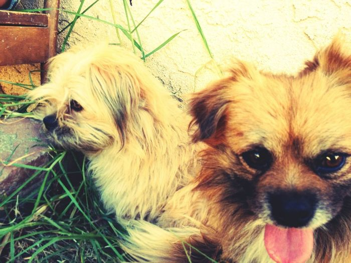 Chiko And Spanky
