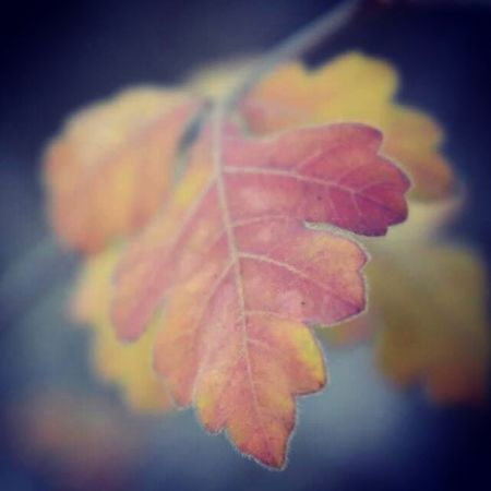 Fall on me Autumn Leaf Nature Change Beauty In Nature Close-up Outdoors No People Maple Day Fragility Water
