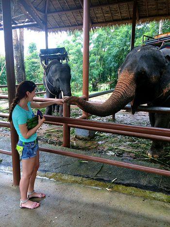 Koh Samui Thailand тайланд Elephant Park Relaxing