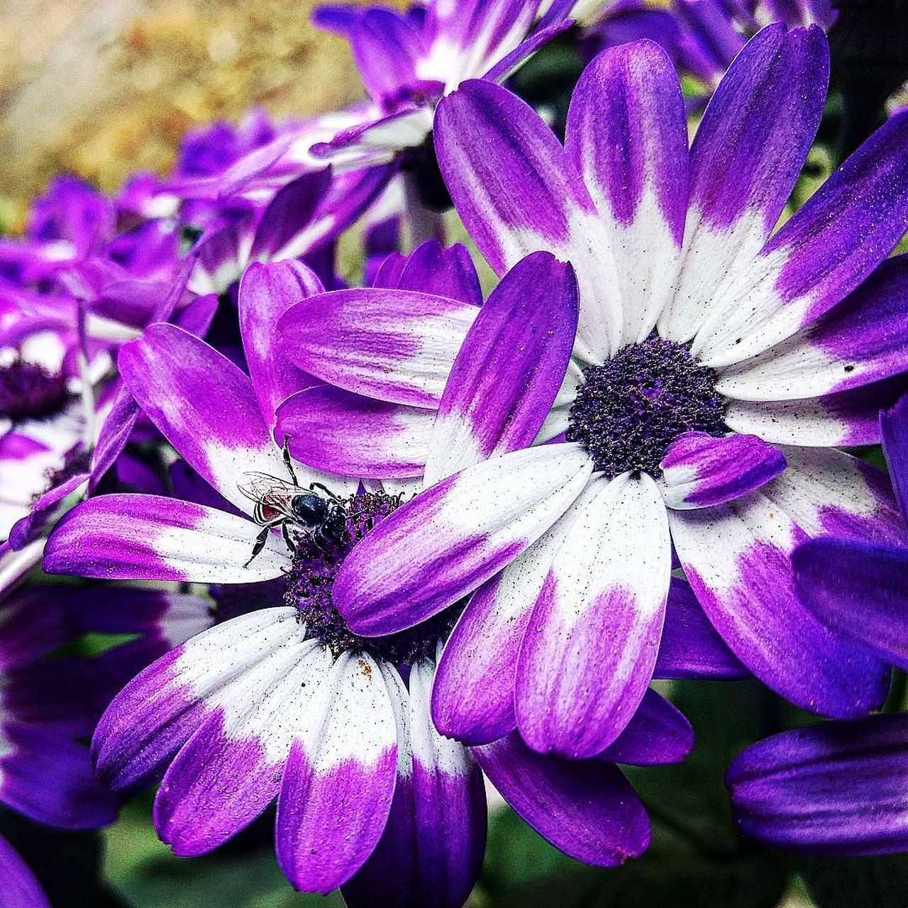 flower, petal, purple, nature, flower head, fragility, beauty in nature, one animal, animals in the wild, growth, animal themes, no people, plant, freshness, day, insect, outdoors, close-up, blooming, osteospermum