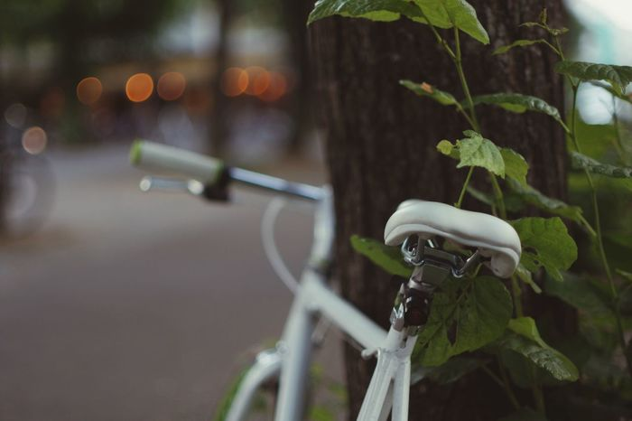 Bikeseat Lean Against Tree White Bicycle Bike Focus On Foreground Leaf Plant Part Plant No People Close-up Nature Bicycle City Selective Focus Tree Green Color Outdoors Street Day Metal