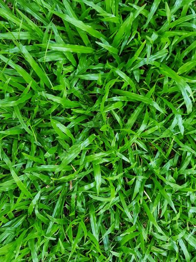 Backgrounds Full Frame Leaf Close-up Grass Plant Green Color Greenery Green Lush Foliage Grassland Spring Countryside Shrub