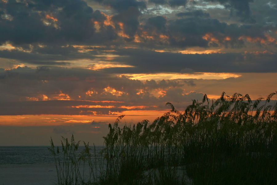 Coastline Gulf Of Mexico Nature Orange Color Outdoors Plant Saint Petersburg Florida Scenics Sea Sea Oats Shore Sky Sunset Tampa Bay Water