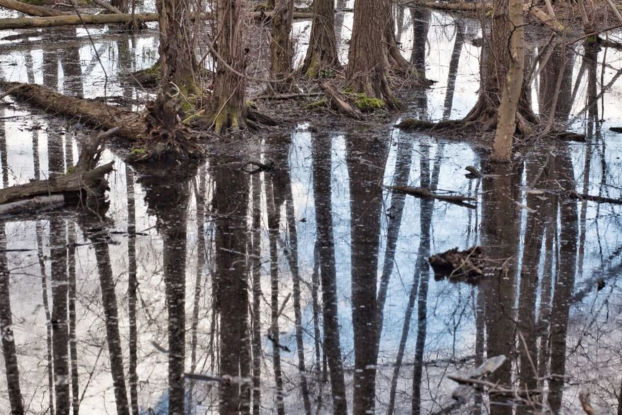 Trees Rain Water Reflection Upside Down Sky Flood Roots