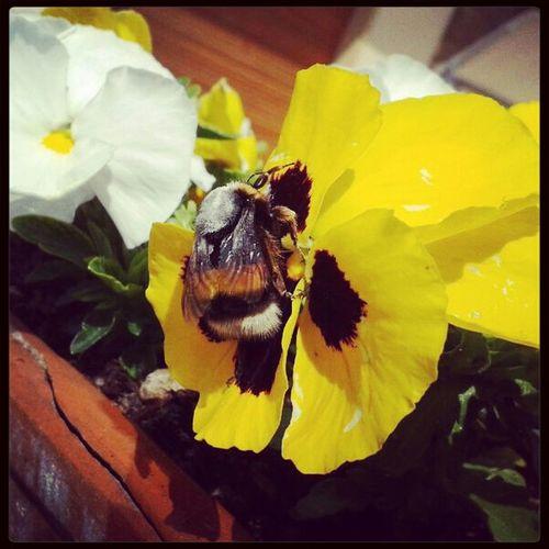 Spring / Primavera Spring Flowers Eyem Nature Lovers  Eyem Best Shots Nature_collection