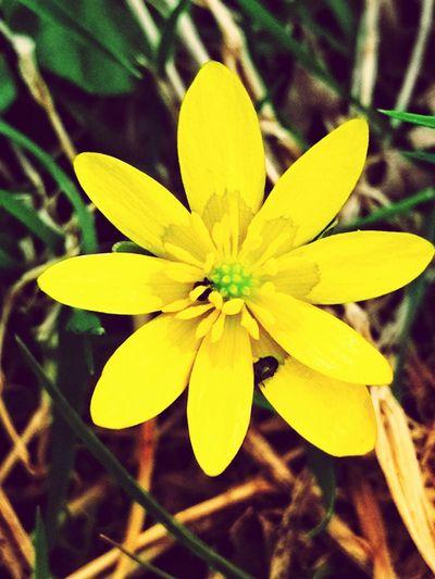 Flower Head Flower Yellow Petal Blossom Close-up Plant