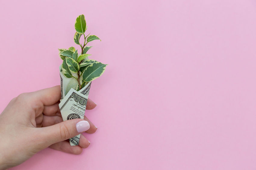 a green plant is wrapped in a hundred-dollar bill on a colored background Pink Hand Business Life Plant Prosperity Revenue Rich Wages Wrap Abundance Background Colorful Copy Space Dollar Earnings Finance Financial Income Investment Leaf Money Profit Success Wealth Wrapped Us Currency Leaves Exchange Rate Paper Currency