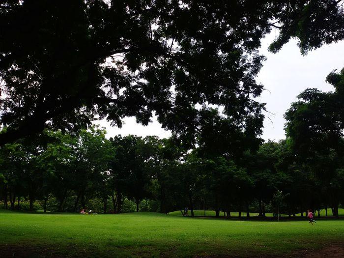 Boy Tree Grass