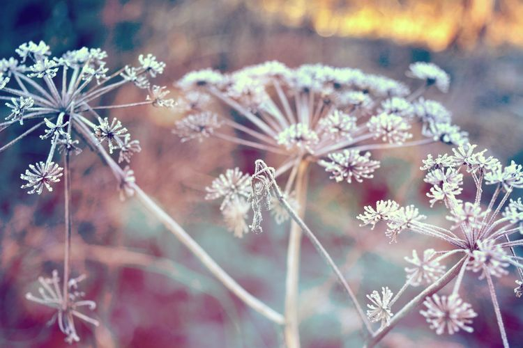 Colorful morning in hoarfrost Closeup Flower Grass Nature Outdoors Plant Season  Softness Leaf Hoarfrost Rime Winter Tree Colorful Chill Frost Dawn Cold Snow Ice Branches