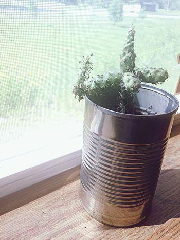 My little buddy Cactus Plant Cute