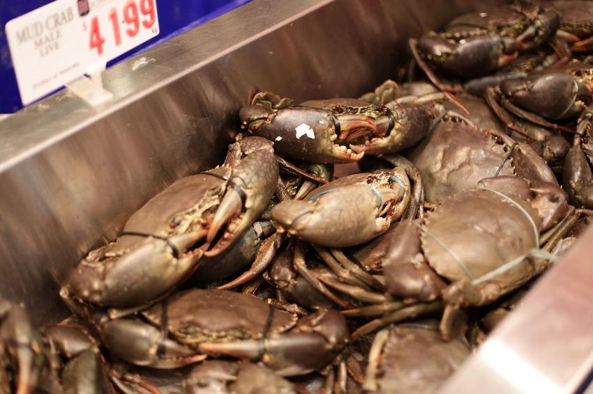 Australia Sydney Fisher Market Crab EyeEm Canon6d Yeloo Traveling Market Travel Photography