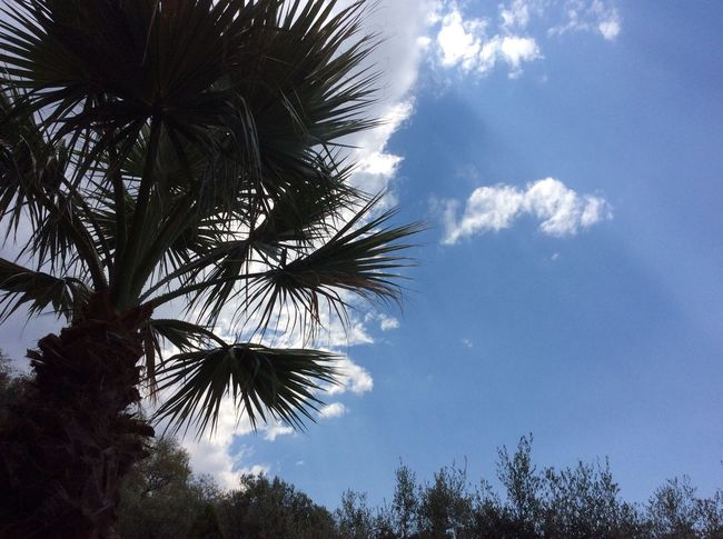 Eyeemphoto Relaxing Taking Photos Sky And Clouds Sky_collection Skyporn Summer Italy Summertime Clouds And Sky Nature Italia Calabria Sky Tree Palm Trees Silhouette Garden Green Light And Shadow Olive Tree