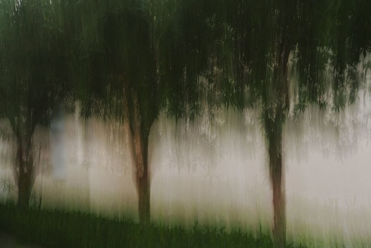ICM Intentional Camera Movement Shapes , Lines , Forms & Composition Trees And Nature Atmospheric Mood Camera Paint Creative Photography Painting With A Camera Nature Impressionism Impressionism In Photography Impressionist Effect Abstract Landscape Urban Landscape Outdoors Trees Icm Art Is Everywhere Break The Mold The Week On EyeEm Perspectives On Nature Photo Impressionism