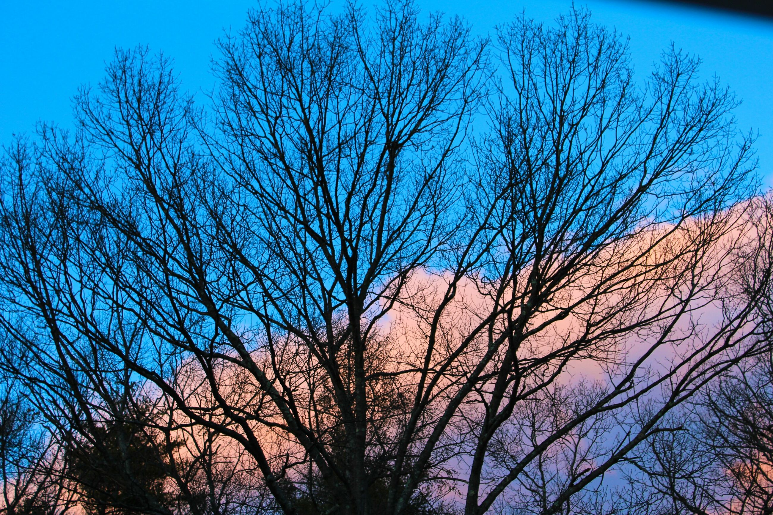 bare tree, tree, branch, blue, silhouette, low angle view, tranquility, sky, beauty in nature, nature, scenics, tranquil scene, clear sky, dusk, tree trunk, sunset, outdoors, no people, growth, idyllic