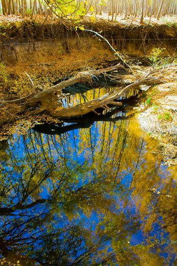 Water Reflections Fall Leaves Canon_photos Canonphotography Canonphotographers Canon600D Treescape