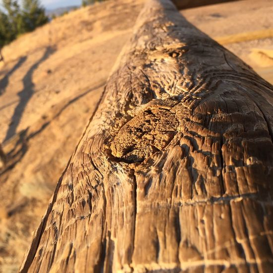 I love wood textures... Amazing Marcos shot! IPhoneography Nofilter