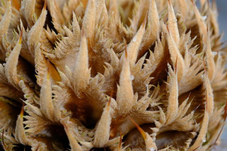 Full frame shot of dry plants