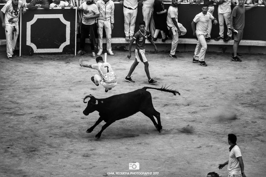 Saltando. San Fermin Pamplona Navarra Party Bullring Animal Bull Bullfighter Jumping Group Of People