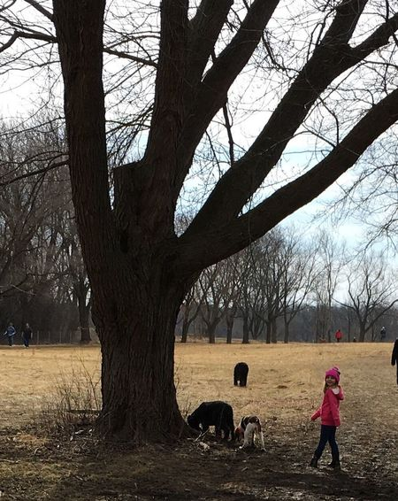 Dog Park Dog Walking Girl And Her Dog