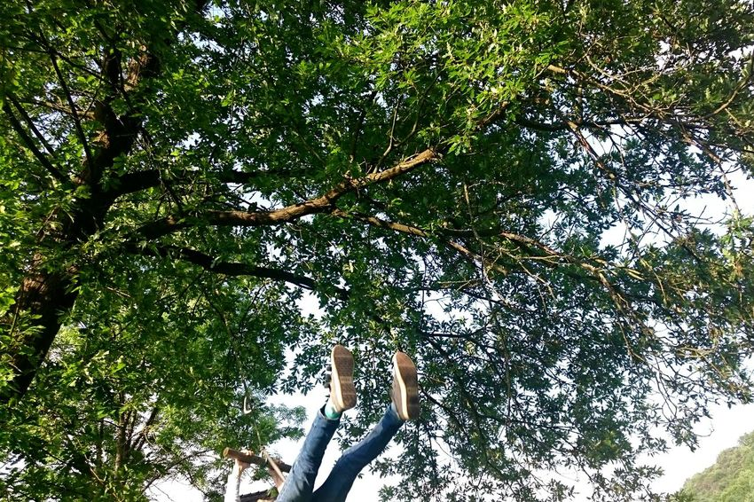 Tree Growth Low Angle View Day Nature Green Color Branch Outdoors Beauty In Nature Leaf No People Sky Swing Play Fun