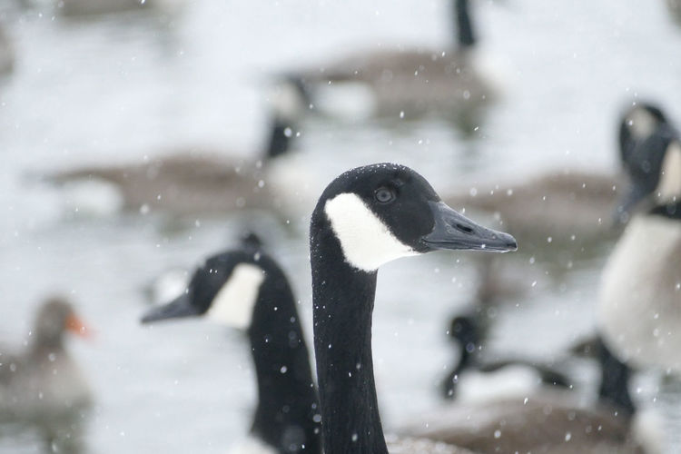 Close-up of bird in snow