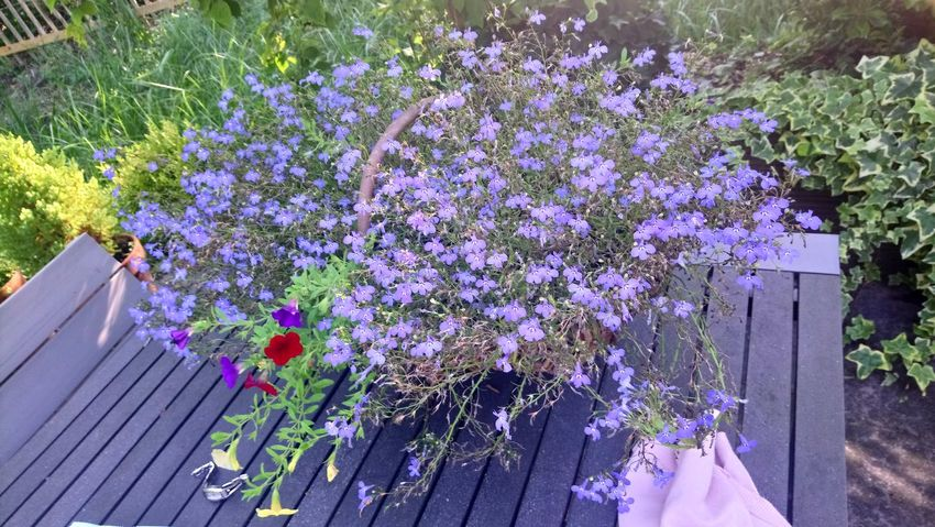 Flower Purple In Bloom Blossom Plant Life