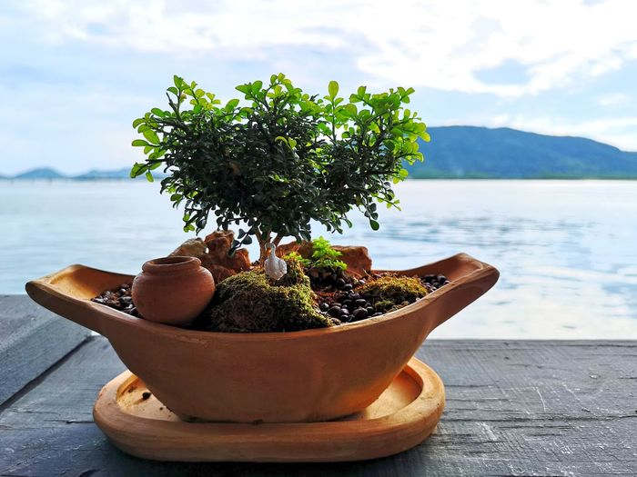 Tree Sea Water Potted Plant Close-up Sky Plant Bonsai Tree Flower Pot Plant Life Houseplant Sandy Beach Terracotta Florist Planting Earthenware Myanmar Culture Succulent Plant Cactus In Bloom Horticulture Window Sill Window Box Gardening Glove Pansy Gardening Equipment Petunia Blooming