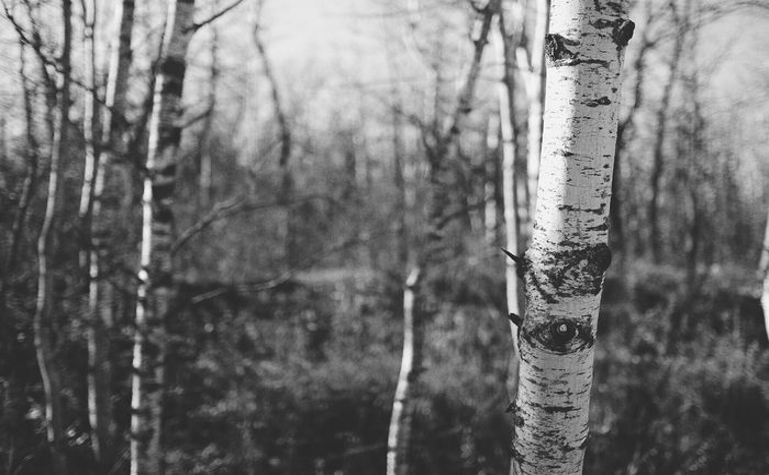 The trees have eyes. Prairie Scenes Autumn Lightandshadow Beautiful Nature FUJIFILM X-T1 Fujixt1 Fujifilm_xseries Trees Howiseethings