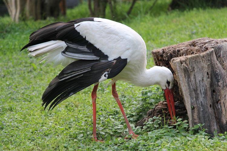 Close-up of bird on field