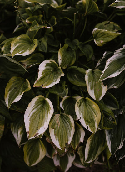 High angle view of leaves