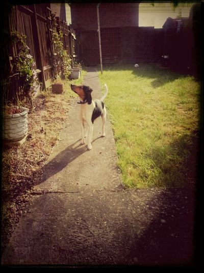 Rocky chasing Sparrows!