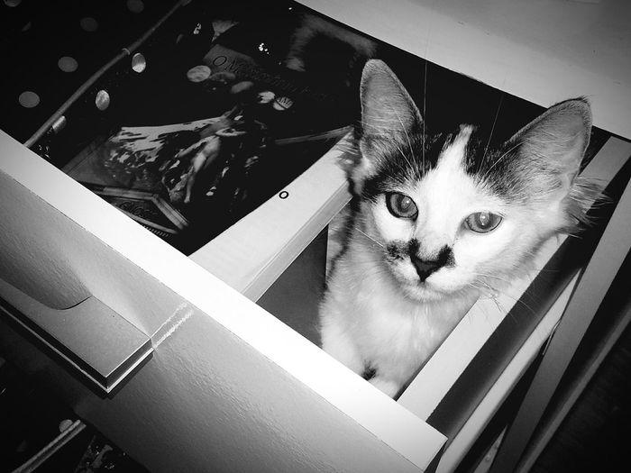 LoveCat😍😍😸 Cat Photography Cat Lovers Cat Eyes Catbeauty