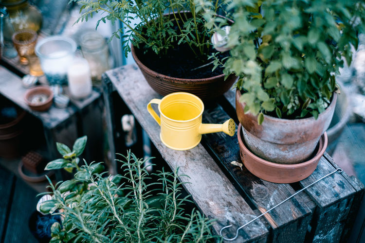 MY SECRET GARDEN Beauty In Nature Gardening Green Nature Summer Plant Potted Plant Growth Green Color No People Day Leaf Plant Part High Angle View Outdoors Container Selective Focus Close-up Front Or Back Yard Herb Freshness Flower Pot Glass The Great Outdoors - 2019 EyeEm Awards