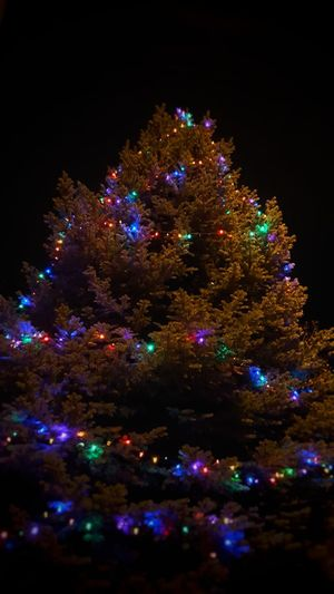 The Culture Of The Holidays Celebration Illuminated Night Tradition Christmas Low Angle View Decoration Christmas Decoration Christmas Tree Religion Christmas Lights Multi Colored Decor Cultures Christmas Ornament Branch Holiday Vacations Fairy Lights Celebration Event