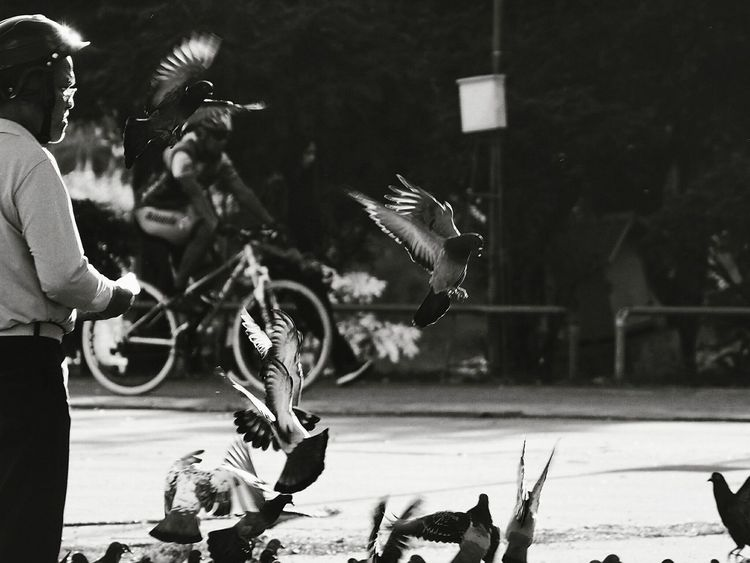 Bird Street Lieblingsteil Miles Away The City Light Shadows & Lights Shadow Light Bird Fly White And Black Man Street Khonkaen Thailand Dove Sunlight Two People Animals Masses Group Poultry