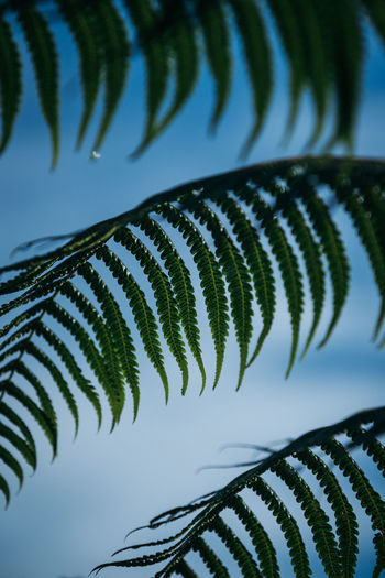 Fern leaves Fern Tree Fern Leaf Plant Part Plant Nature Green Color Tree Palm Tree Natural Pattern Leaves Palm Leaf Leaves And Sky Tropical Tropical Tree Leaves Photography Leafs Leaf Background Green Environment Ferns Green Green Foliage Foliage Tropical Foliage